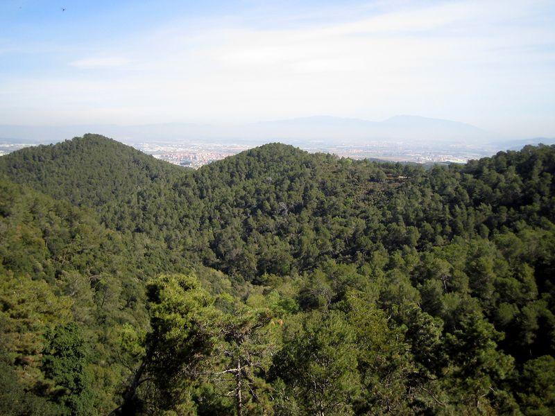 bosque-pinos-800x6001