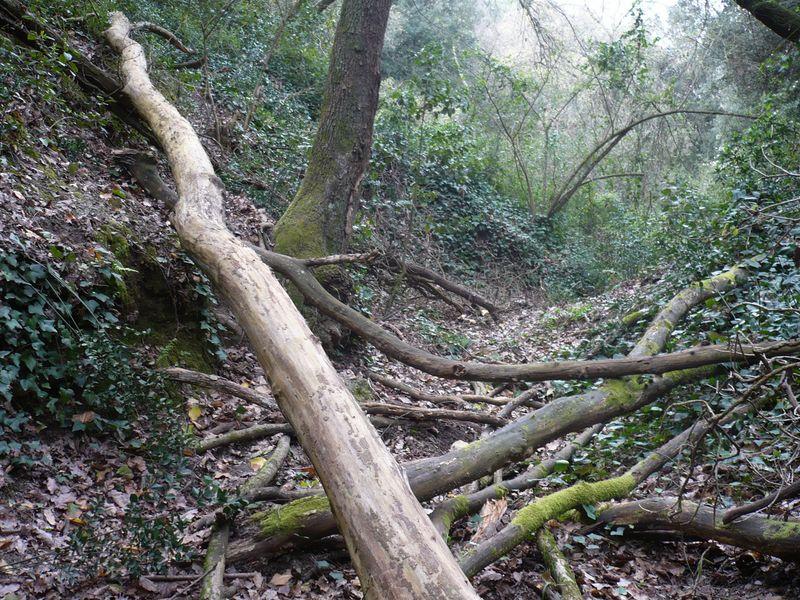 bosques-800x6001